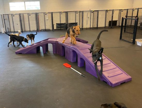 Doggy Daycare, Training, Grooming and More!